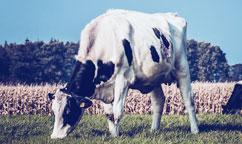 农牧业直播